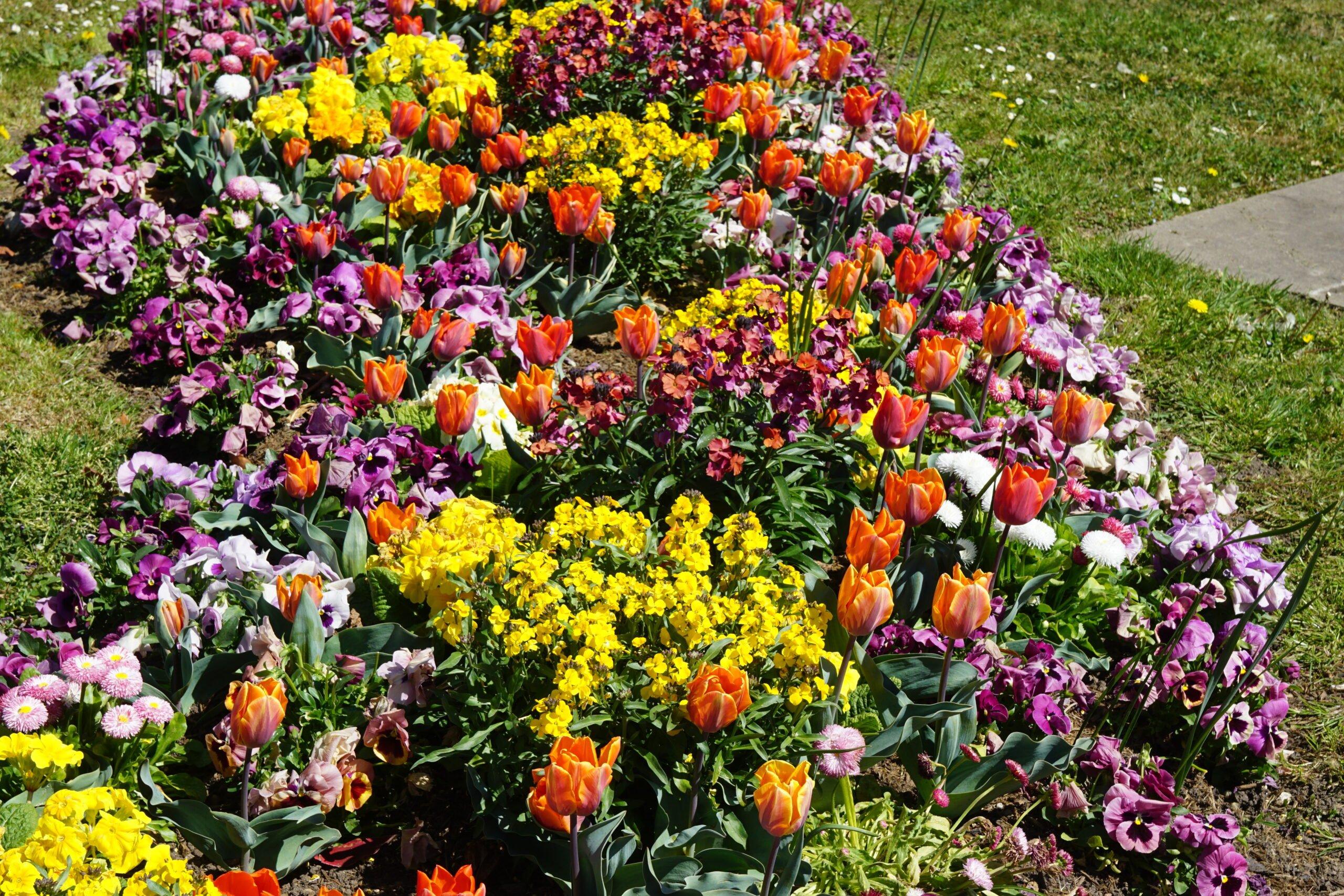 Fleurissement-jassans