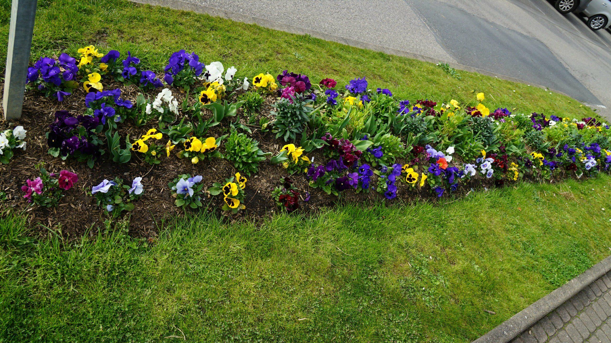fleurissement-jassans7359